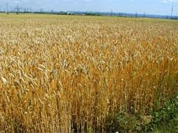Автоматизация сельскохозяйственного предприятия, фермерского хозяйства